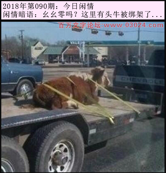 090期今日闲情:幺幺零吗?这里有头牛被绑架了...
